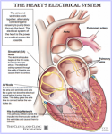 The Heart's Electrical System Illustration