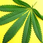 Recreational Marjuana and A-Fib at A-Fib.com