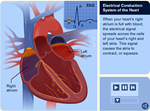 Introduction to Your Heart's Electrical System