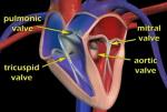Video: Heart's circulatory system at A-Fib.com